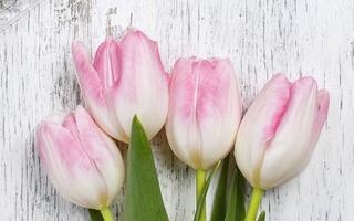 Kreator Kwiatów