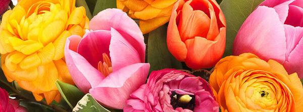 Euroflorist kwiaty